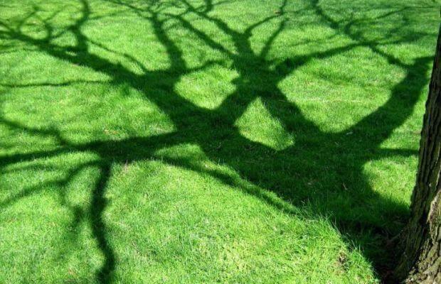 Cihanı Saran Ağaç